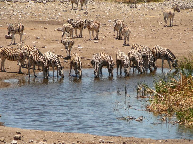 313_on-v-Periple_en_Namibie_et_Safari_au_Botswana__Agence_Esprit_d_Aventure